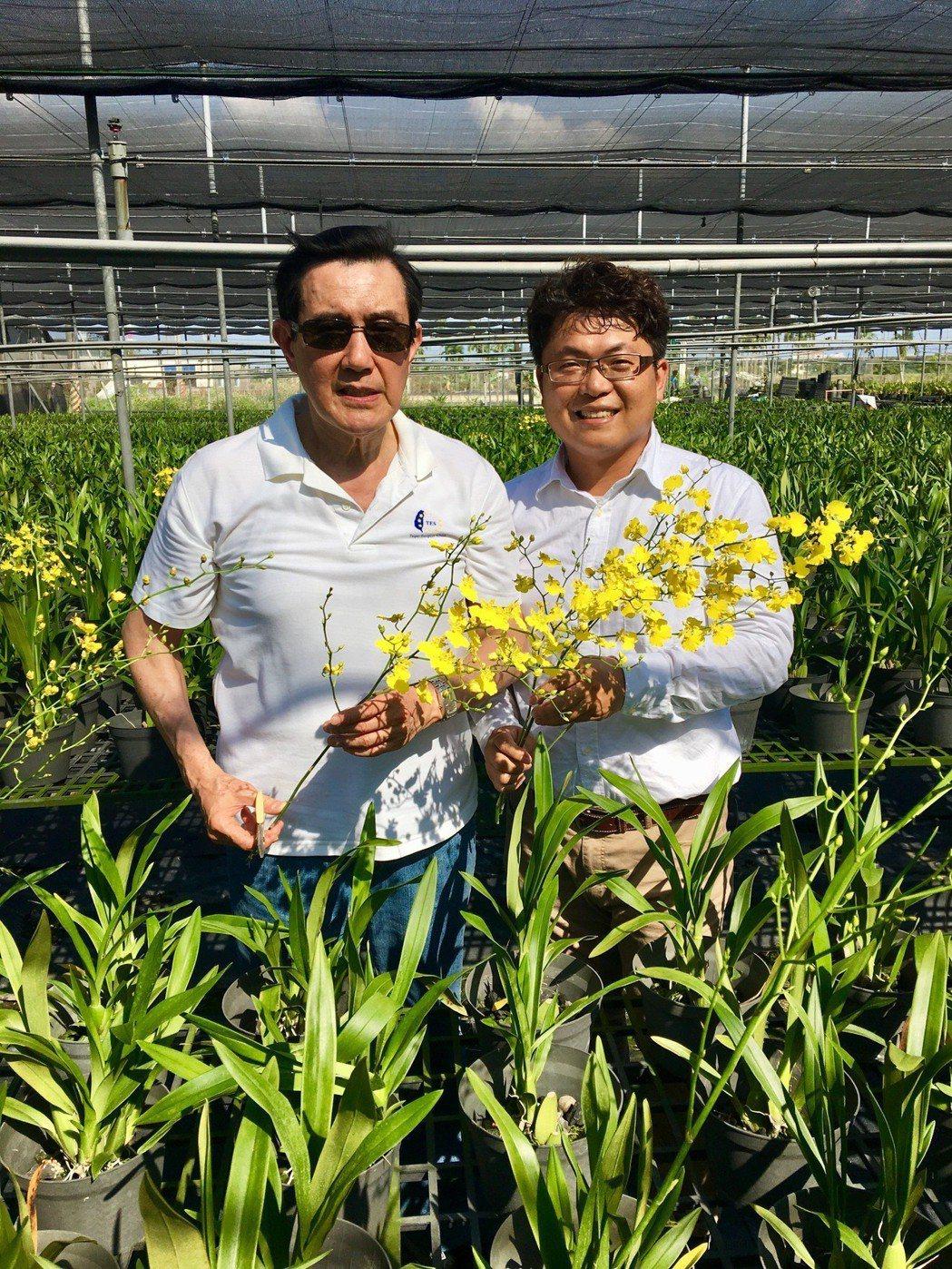前總統馬英九訪屏東,還特別去看了文心蘭產業。圖/陳宏志提供