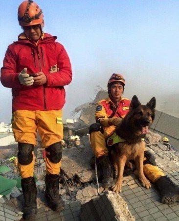 過世的搜救犬斐鬥曾參與0206維冠大樓震災,斐鬥在6歲時死於急病胃扭轉,讓人不捨...
