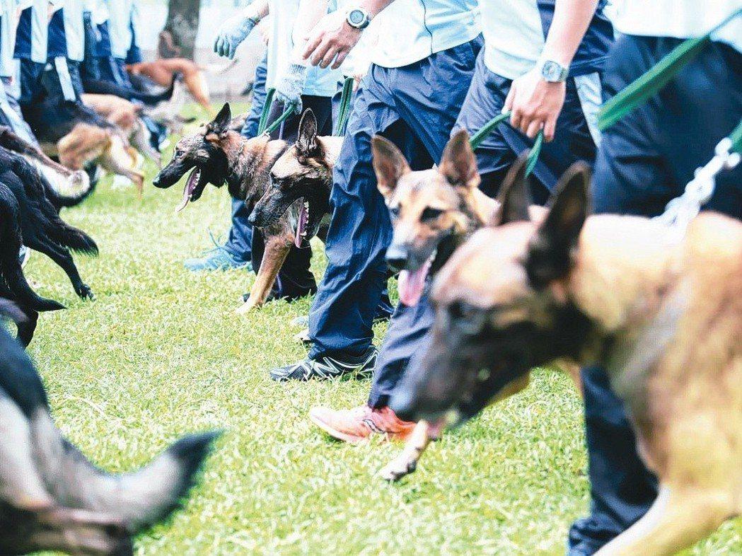 警犬隊每天至少訓練4個小時,維持彼此的良好默契。 圖/聯合報系資料照片