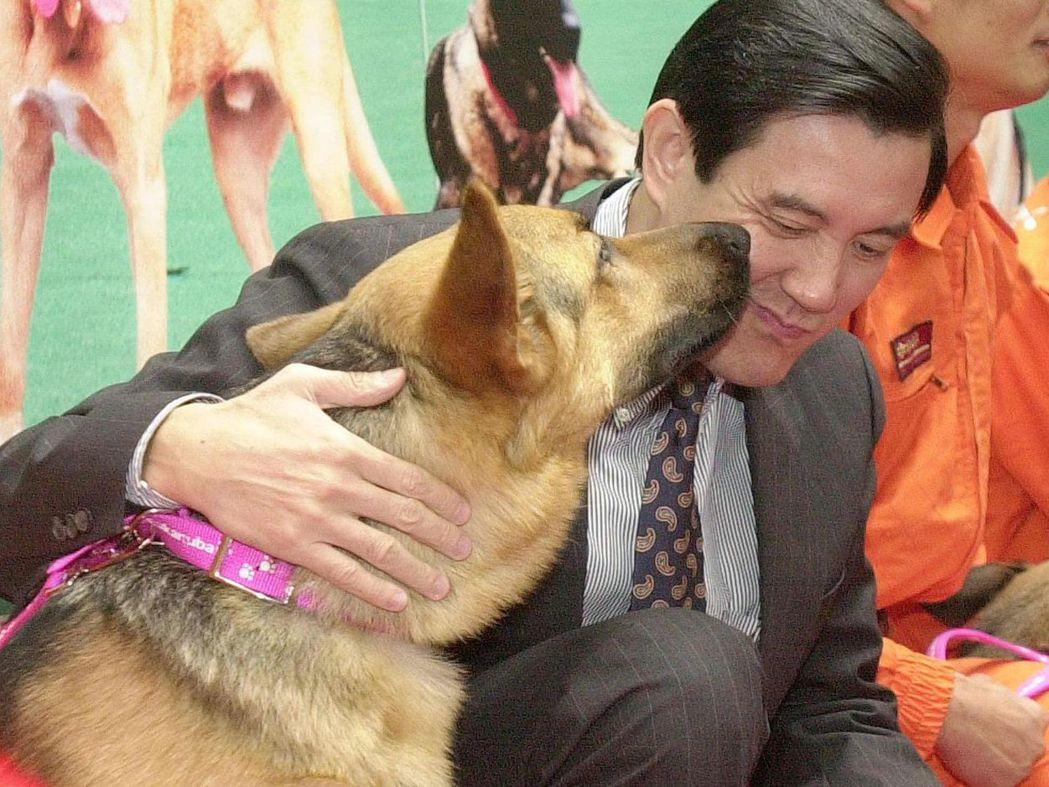 馬前總統擔任台北市長時,在搜救犬耳邊「耳提面命」一番,搜救犬反身親了馬英九一臉口...