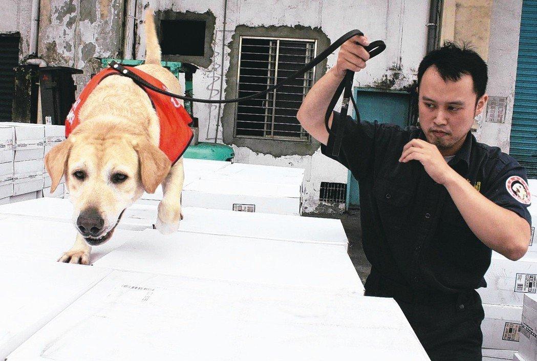走私猖獗,航調處緝私犬、檢疫犬經常出動執勤。 圖/聯合報系資料照片