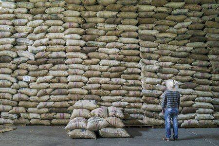 哥倫比亞咖啡產量居世界第二,僅次於巴西 (照片/紐約時報提供)