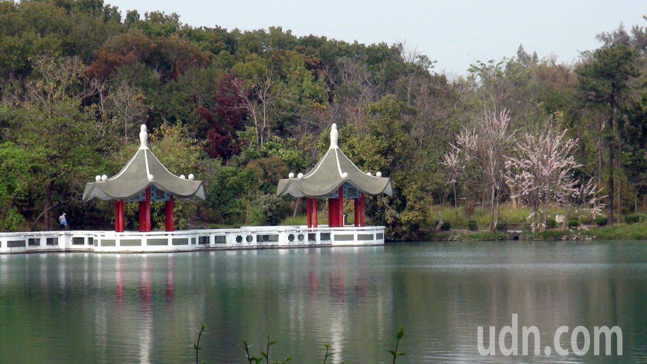 澄清湖雙連亭旁,南洋櫻正盛放。記者王昭月/攝影