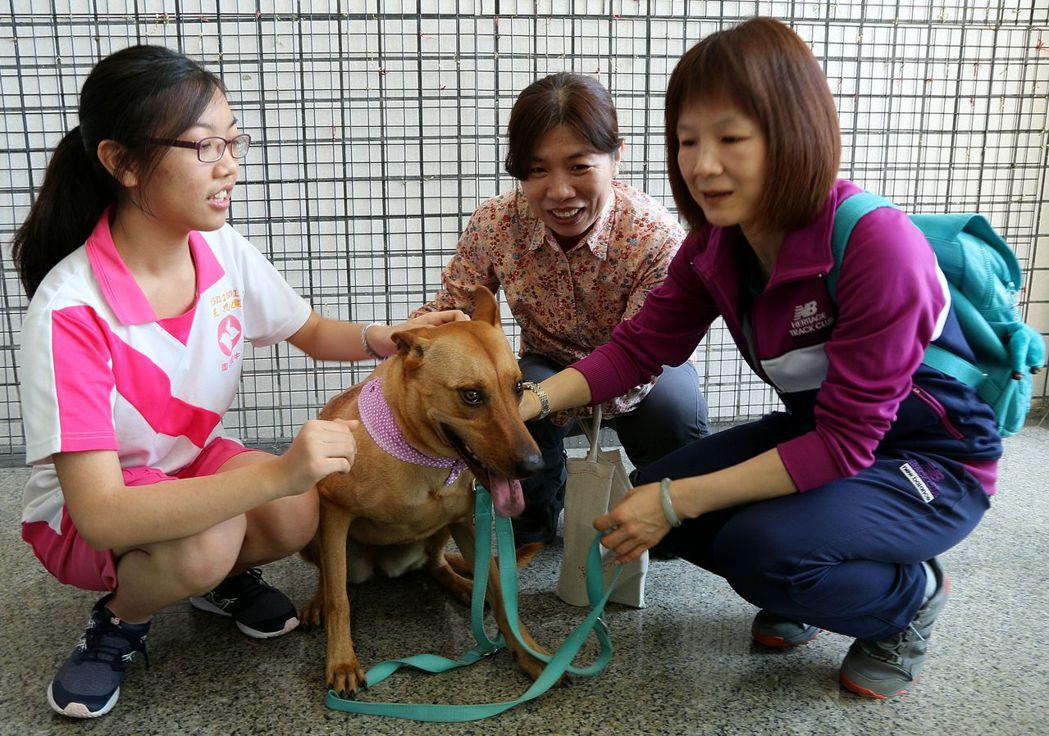 楠梓特殊學校的友善犬「妞妞」,獲高雄市府聘為「優良動物保護宣導助教」。 記者徐如...