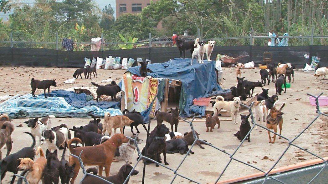 草屯鎮私人狗場飼養300多隻狗,卻因缺乏照顧,造成狗群餓死、狗吃狗等慘狀。 圖/...