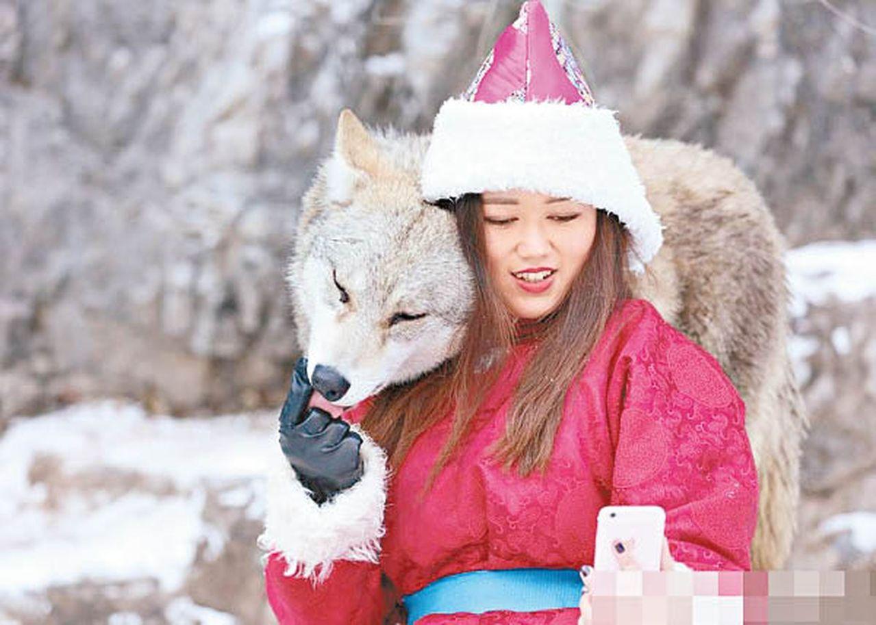 25歲女子在內蒙古草原養狼:能一起摸爬滾打,曾被咬破血管 圖/紫牛新聞