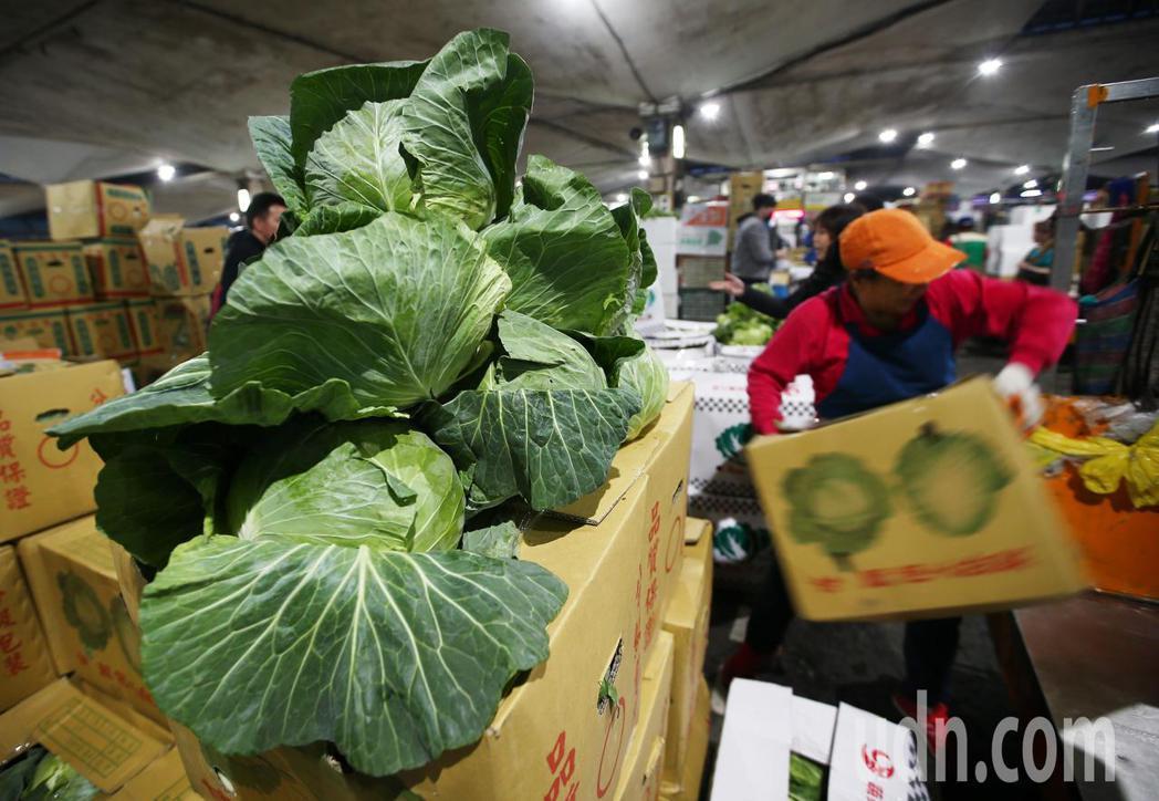 經過三天休市後,從各地送來台北果菜批發市場的高麗菜堆積如山,等著拍賣。記者杜建重...