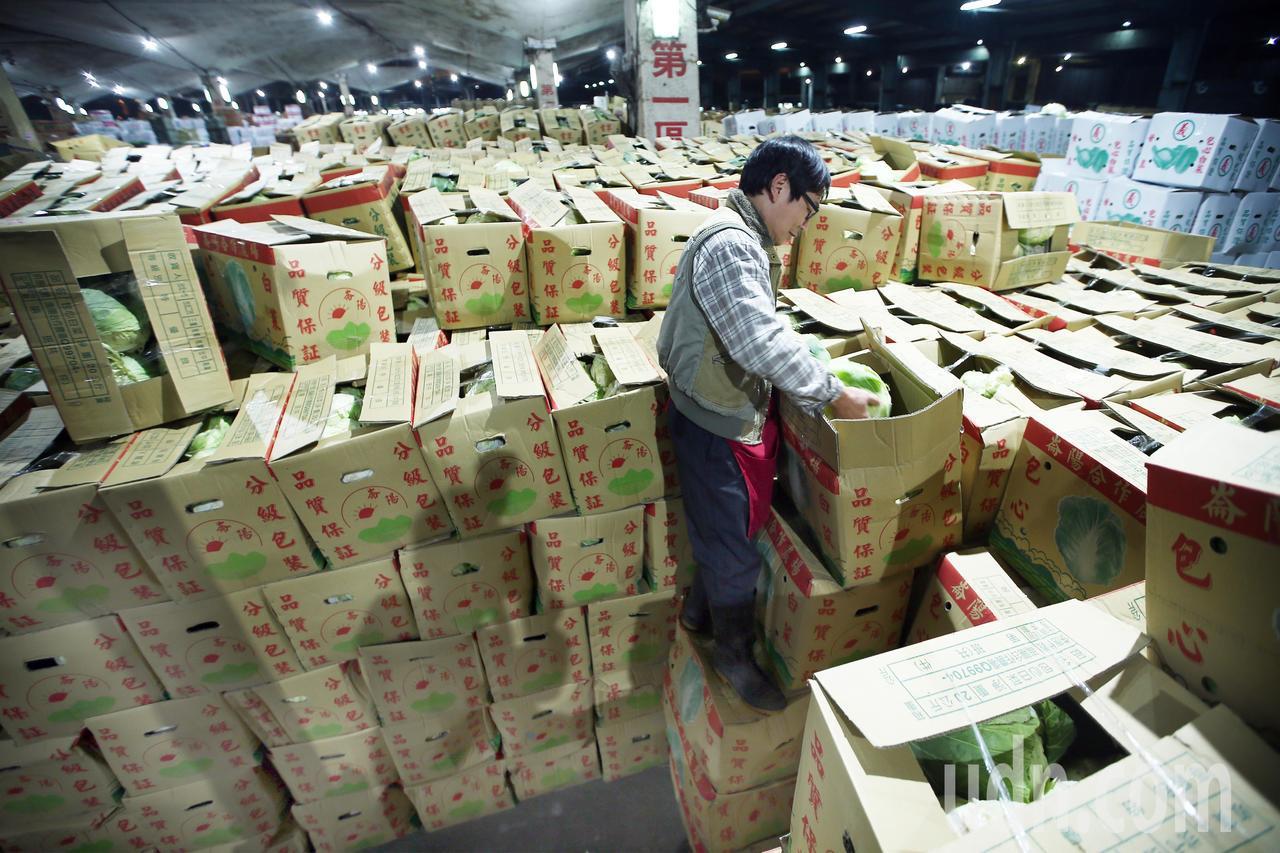 經過三天休市後,台北果菜批發市場今天凌晨恢復正常交易,從各地送來的高麗菜堆積如山...