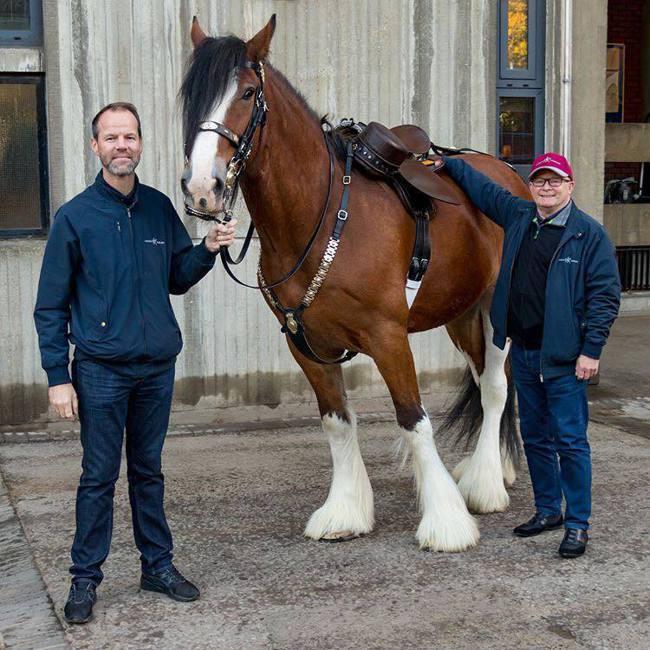 馬匹鞍轡在慶典時的裝飾鍊帶,是愛馬仕全新珠寶錶的設計靈感來源,目前英國皇家近衛騎...