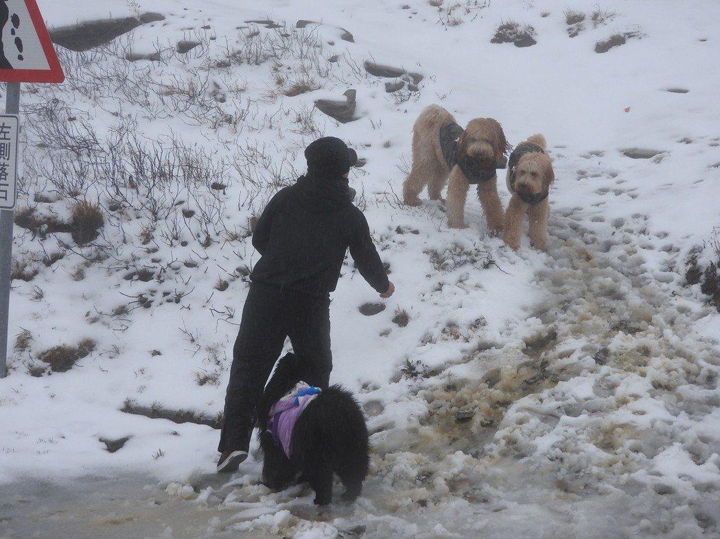 合歡山雪季總能吸引大批遊客,連狗狗也會一起上山追雪,但也帶進大量垃圾。 圖/聯合...