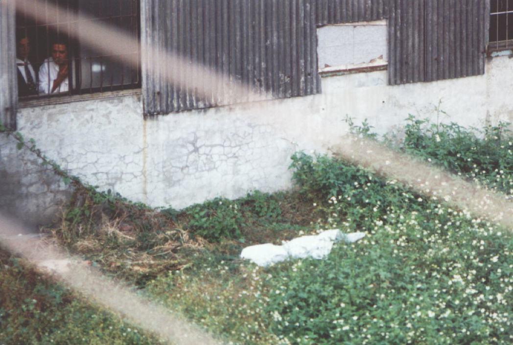 1996年12月3日,警方發現彭婉如屍體後以白布覆蓋。 圖/聯合報系資料照片