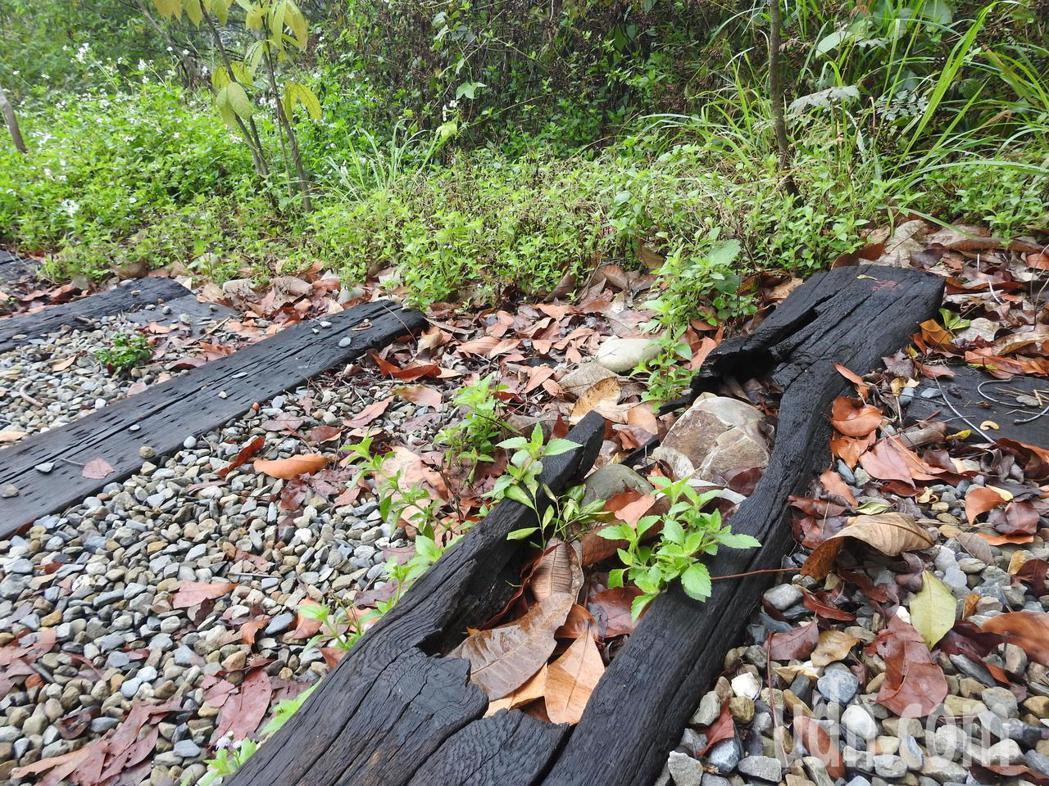 九九峰森林步道部分木棧板破損,有山友索性塞石頭堵住洞口,盼降低造成傷害的可能性。...