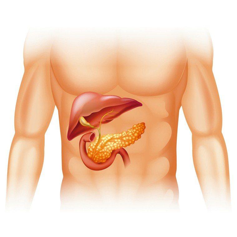 沉默的器官─胰臟深居在上腹後背脊柱的前方。 圖╱RF123