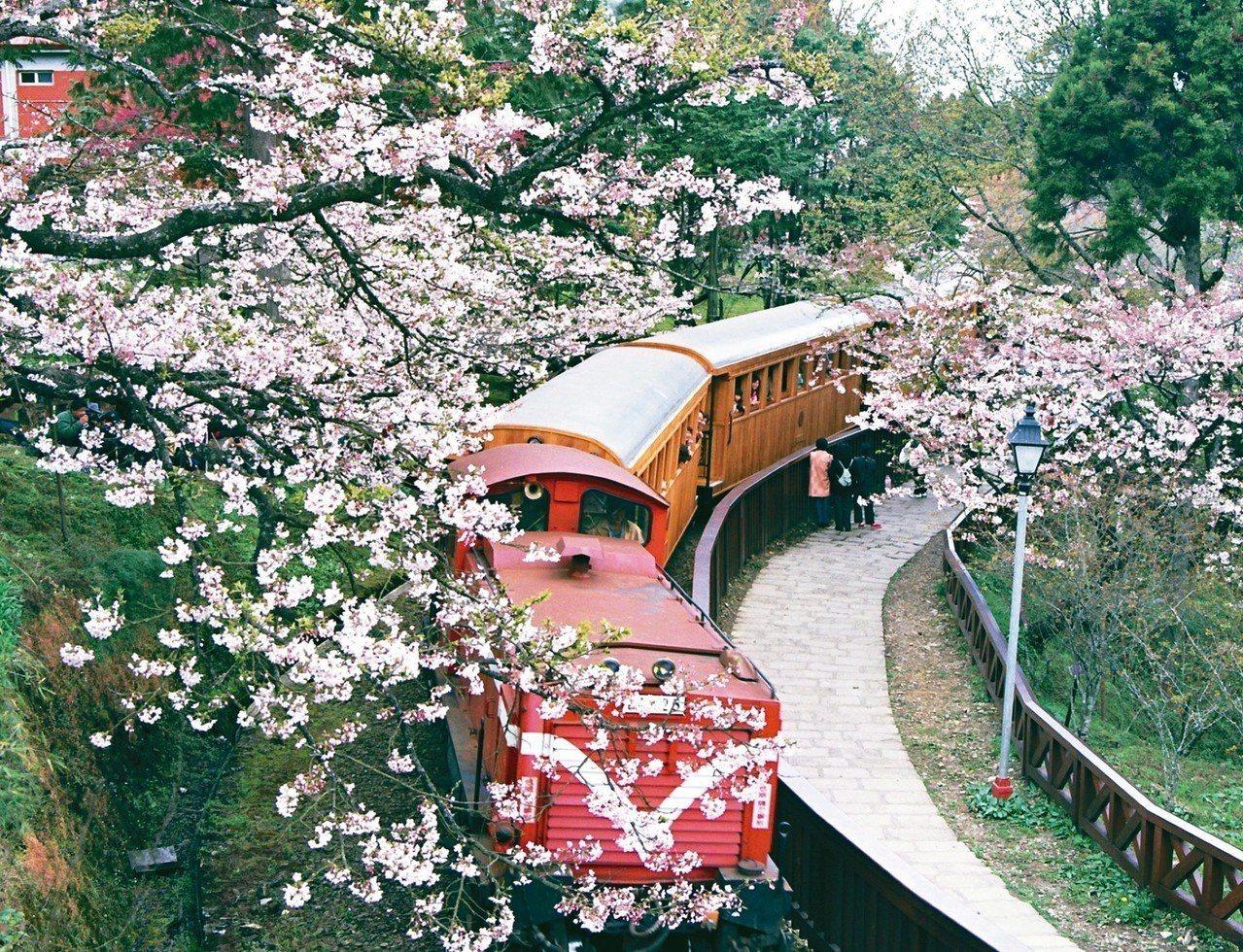 阿里山櫻花季下周四起展開,阿里山森林鐵路管理處上午宣布,森鐵本線繼續停駛三個月。...