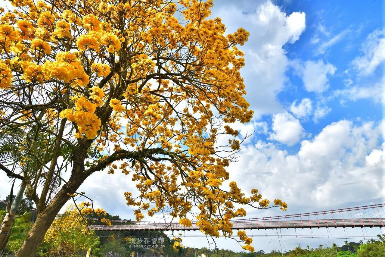 竹崎親水公園地景豐富,適合民眾取景拍攝。圖/《漫步在雲端的阿里山》授權提供