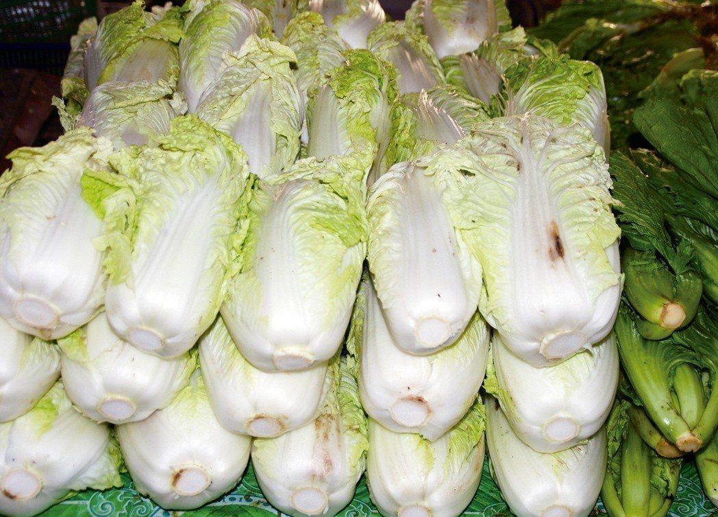 大白菜。 圖/元氣周報
