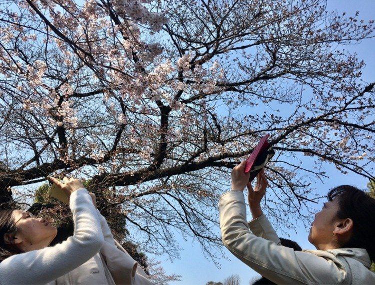 部分民眾到日本以自駕租車方式旅遊,記得申請駕照的日文譯本。圖/本報系資料照片