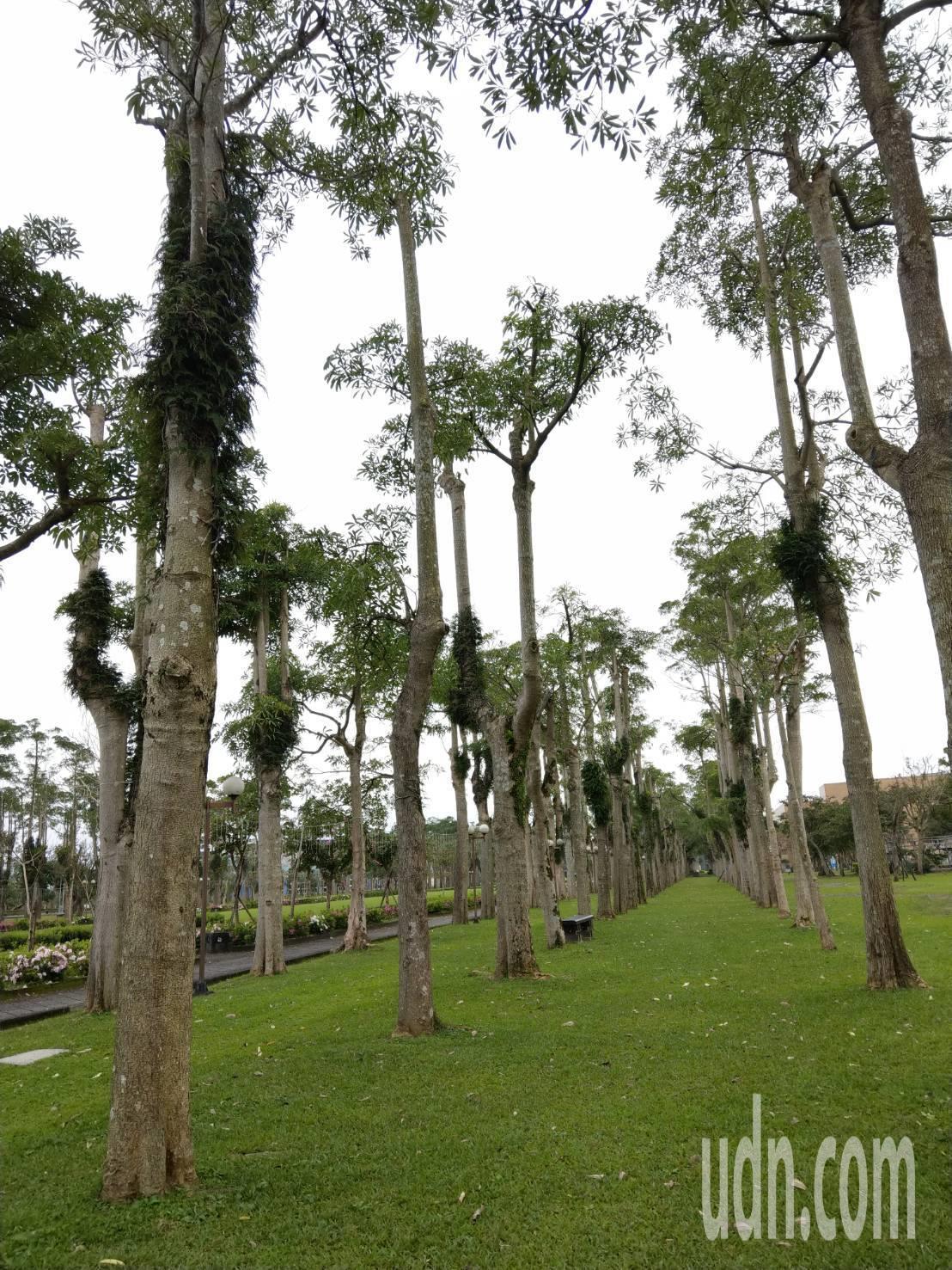 打造宜蘭運動公園完全是前縣長陳定南的規劃構想,他還拿測量儀器要求栽種的每棵樹都要...