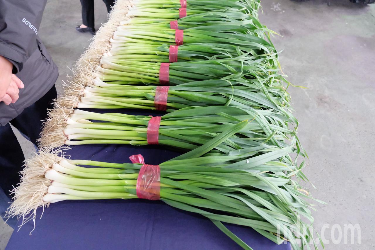 宜蘭縣五結鄉錦草村的青蒜鮮甜可口,今年首度舉辦青蒜節打知名度。記者張芮瑜/攝影