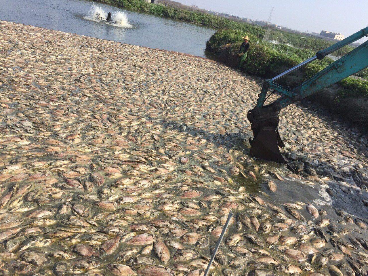 雲林縣沿海養殖戶今年二月受到低溫寒害,農委會啟動天然災害救助,但麥寮鄉的吳郭魚災...