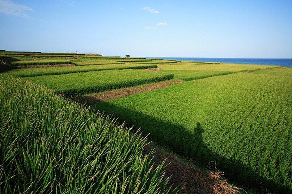 掌生穀粒透過實地尋訪,將在地農作化為有生命的故事。業者/提供