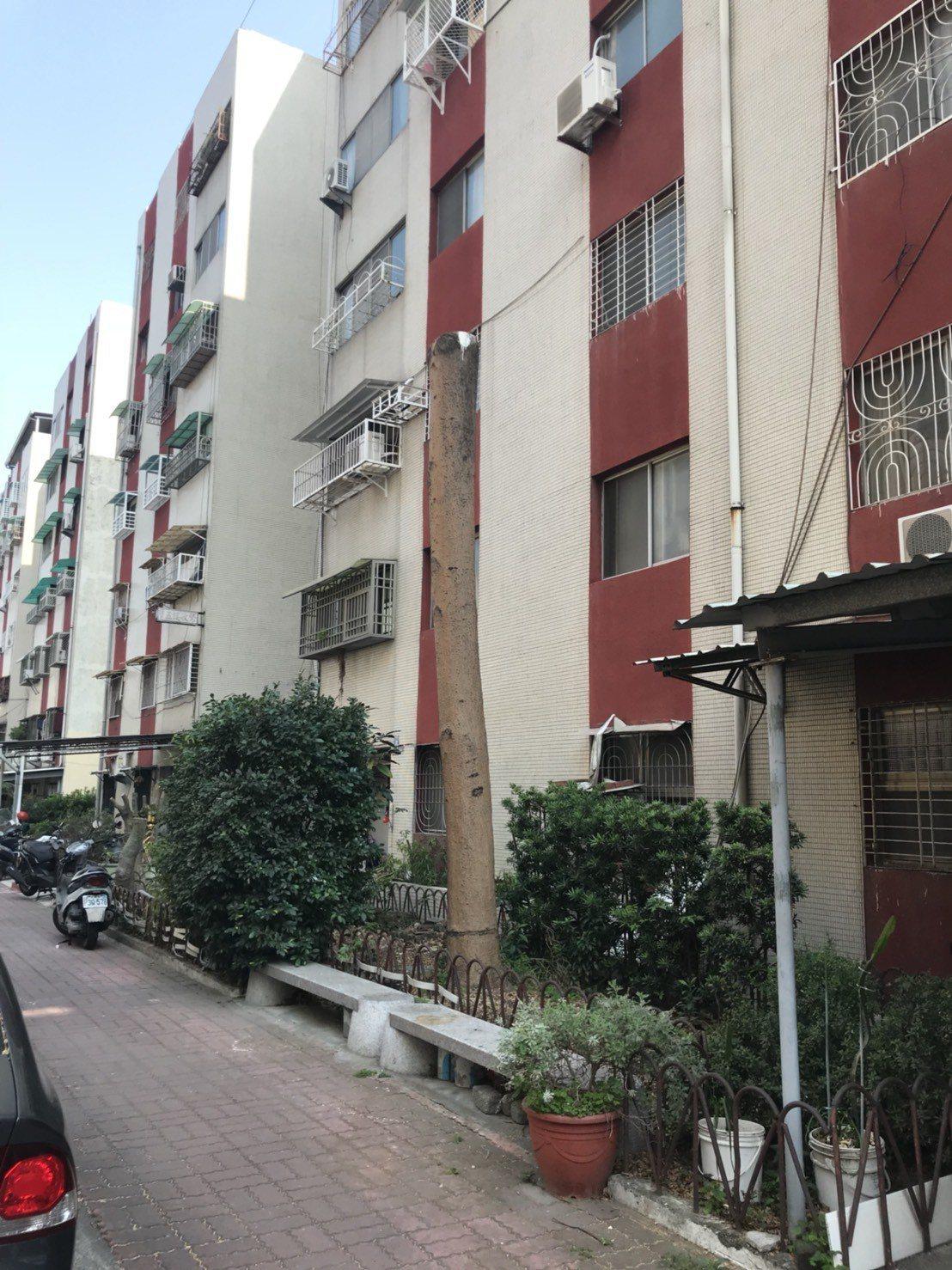 台南市東區衛國社區的路樹遭攔腰砍斷,居民意論紛紛 圖/取自網路