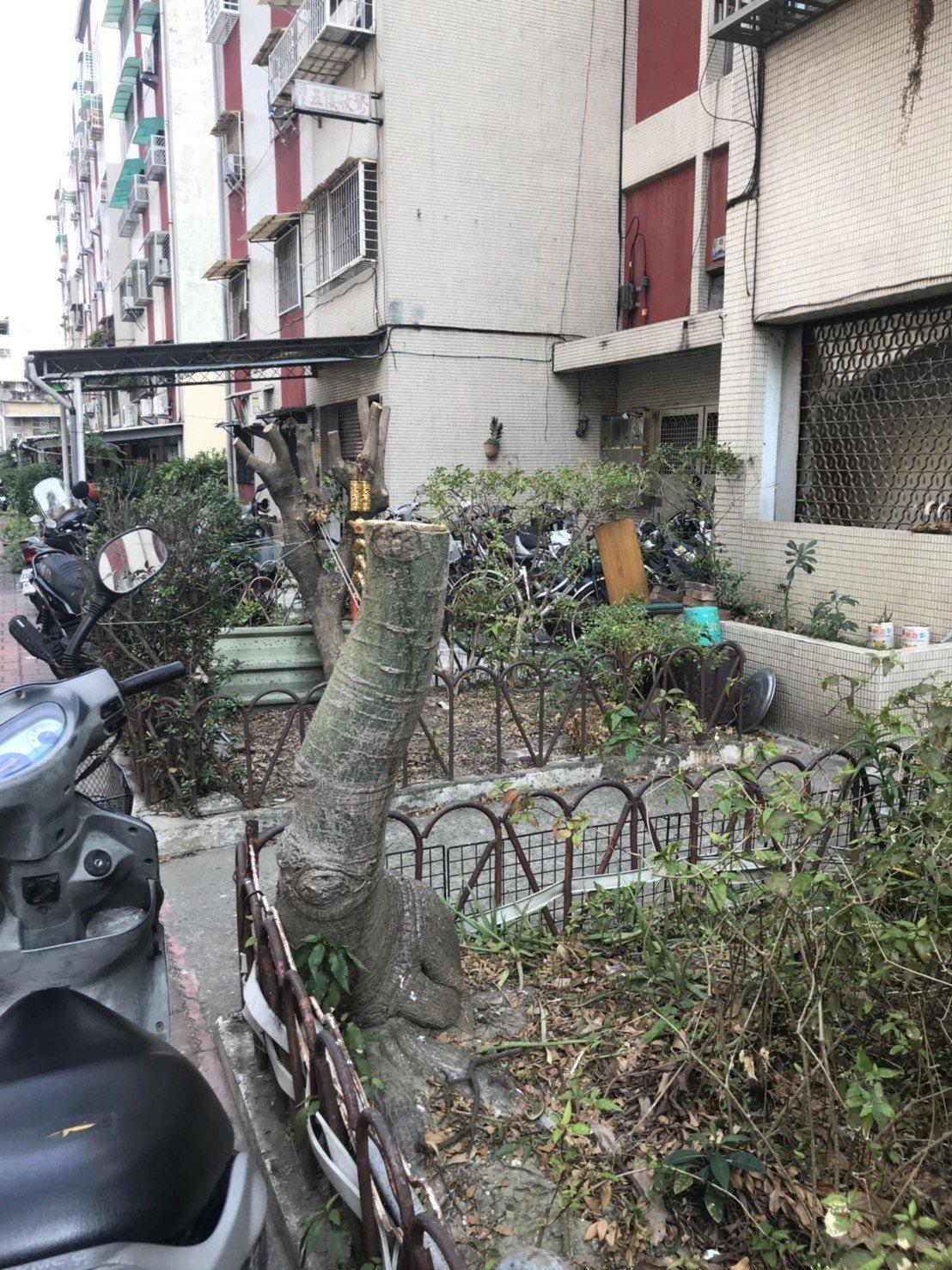 台南市東區衛國社區的路樹遭攔腰砍斷,居民議論紛紛 圖/取自網路