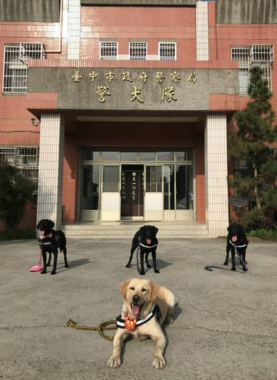 台中市警局警犬隊,4名創隊警犬Pinky(前排)、Tiny、Candy、Bobb...
