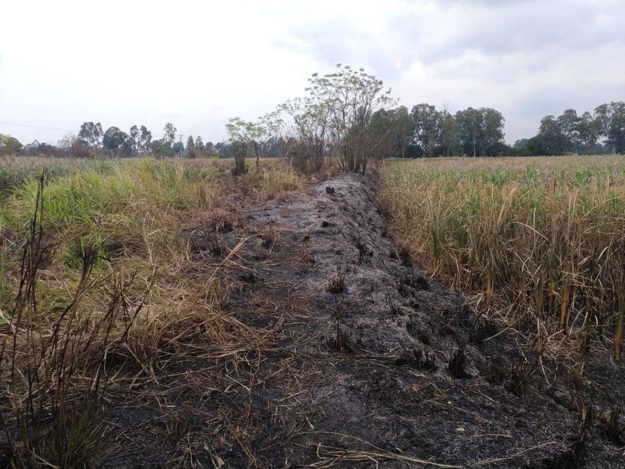 元朗南生圍過去兩天先後發生火災,恒基地產名下地皮至少6公頃林木焚毀變成焦土。(取...