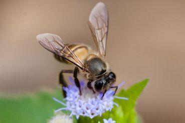 王庭碩/城市養蜂,是為幫助蜜蜂還是滿足自己?