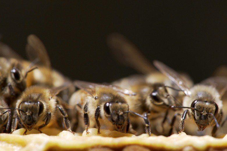 蜜蜂或其他的蜂類並沒有人們想像的那麼危險可怕,若你感到可怕,或許真正的原因在於我...