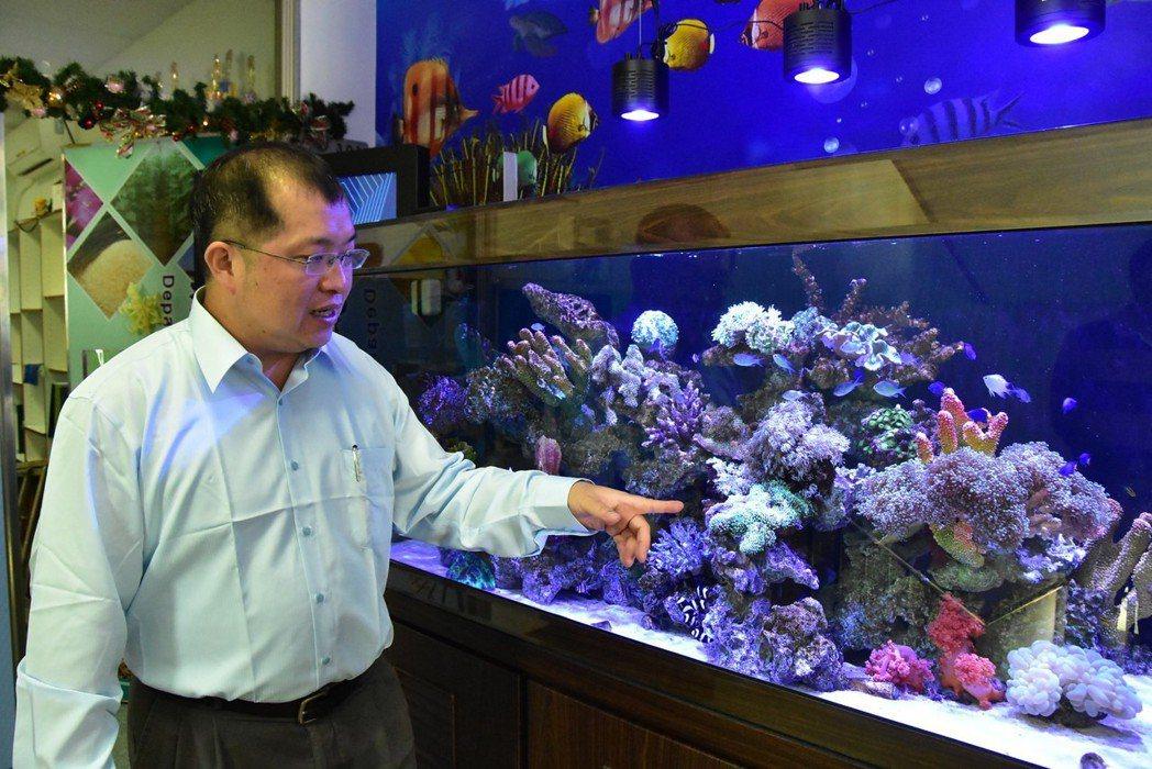 明道大學精緻農業學系何秉岳教授成功復育毛菇珊瑚(手指綠色處) 明道大學/提供。