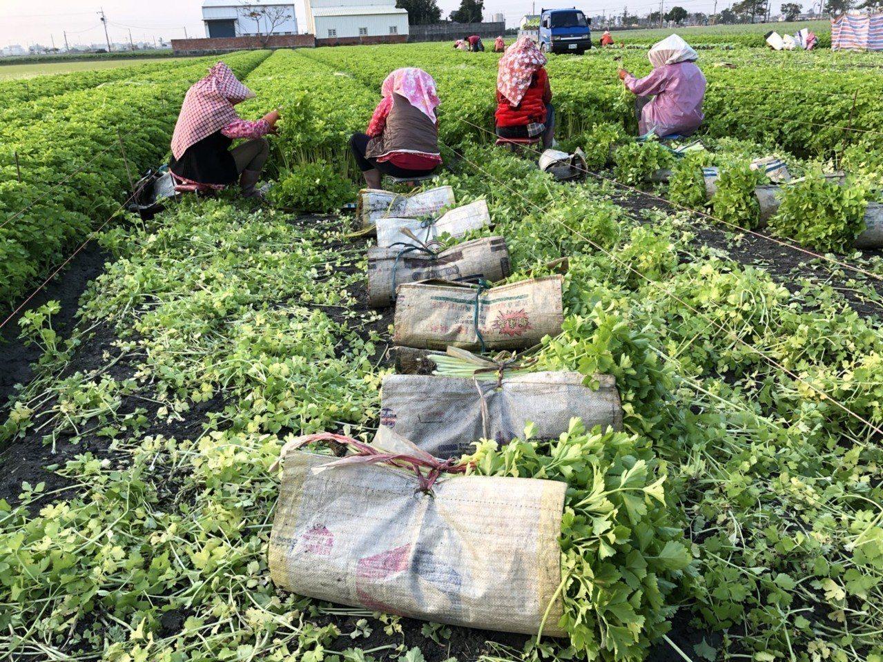 為了平抑農產品的價格波動,農委會主委林聰賢表示,未來要廣設冷鏈物流設施,另外,也...