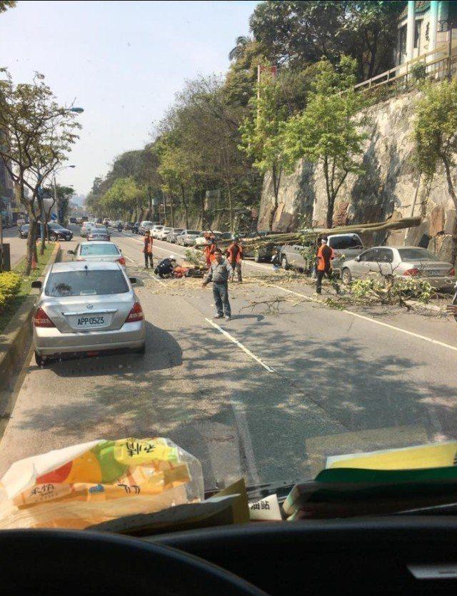 工人砍樹釀意外。圖/翻攝自臉書龜山生活通