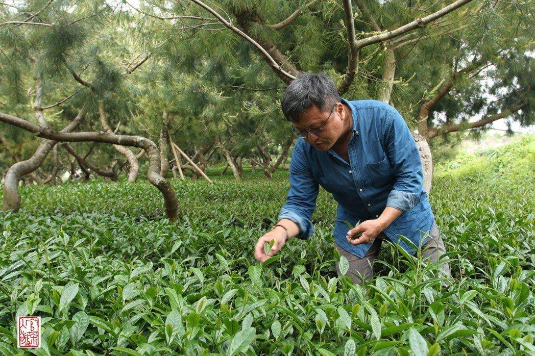 嘉義市「上峰茶行」推廣松下茶,友善市集當天提供茶席,可免費喝茶。圖/余國信提供