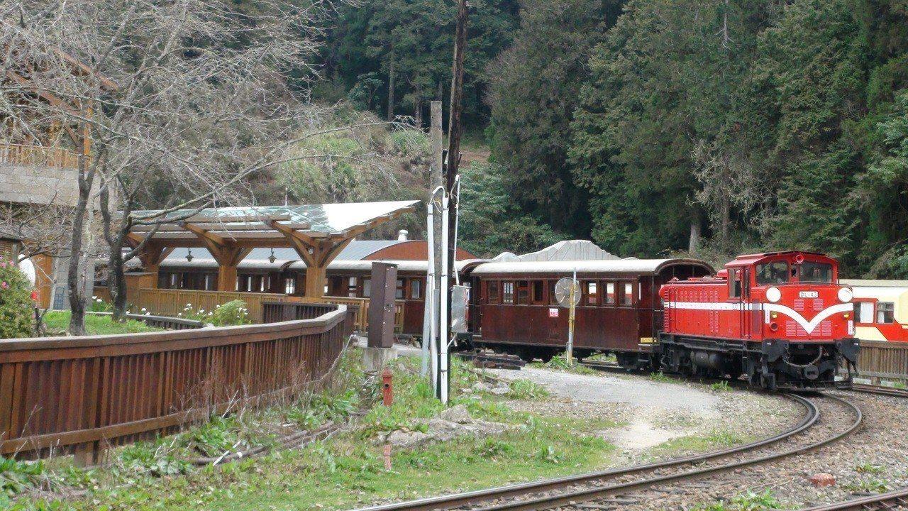 小火車在阿里山森林遊樂區照常行駛,花季還有老火車頭和檜木車廂。記者謝恩得/攝影