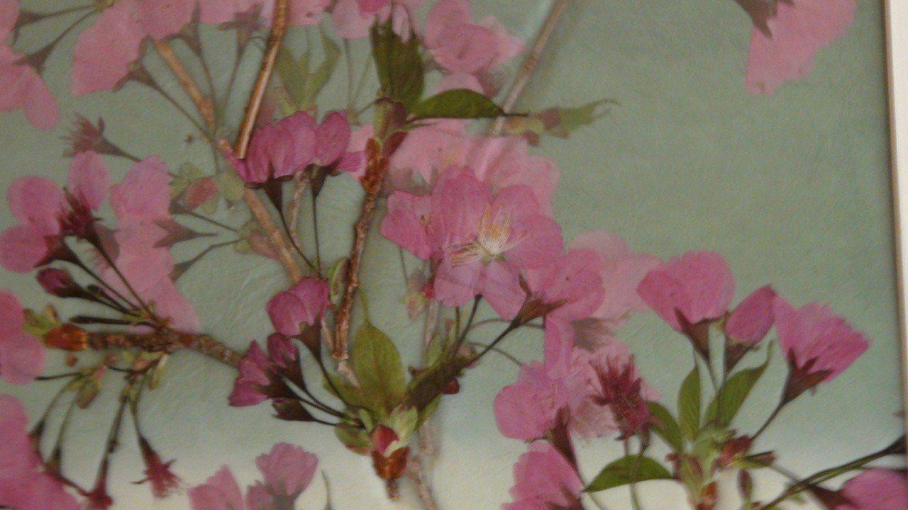 高山植物園的櫻花押花展。記者謝恩得/攝影