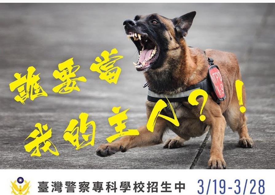 新北市警察局警犬隊的比利時狼犬小淘(左)登上警專招生廣告。圖/取自NPA署長室