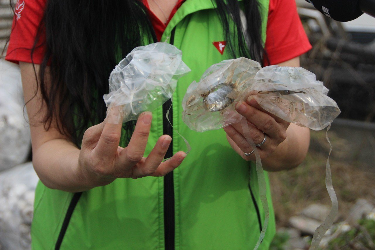 廢棄太空包須人工分類拆解,常讓養菇業者頭大。記者林敬家/攝影