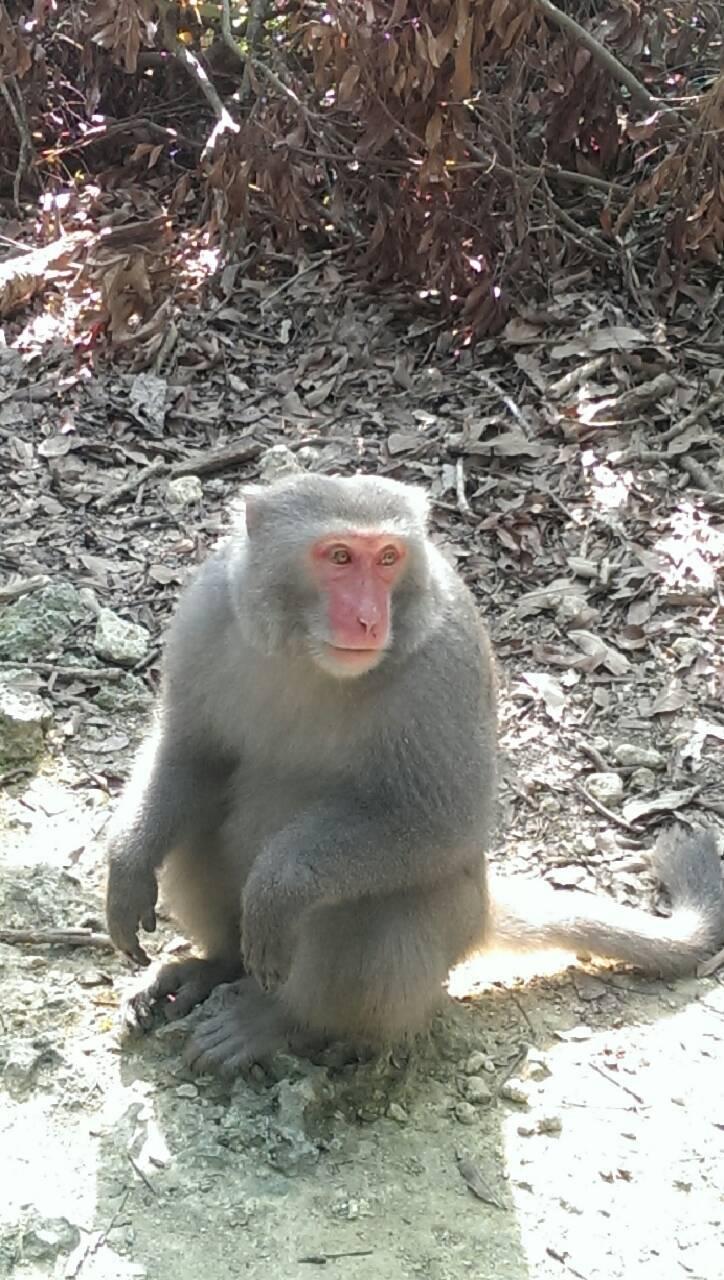 小心! 在高雄市接觸或餵食獼猴要被罰。圖/高雄市農業局提供