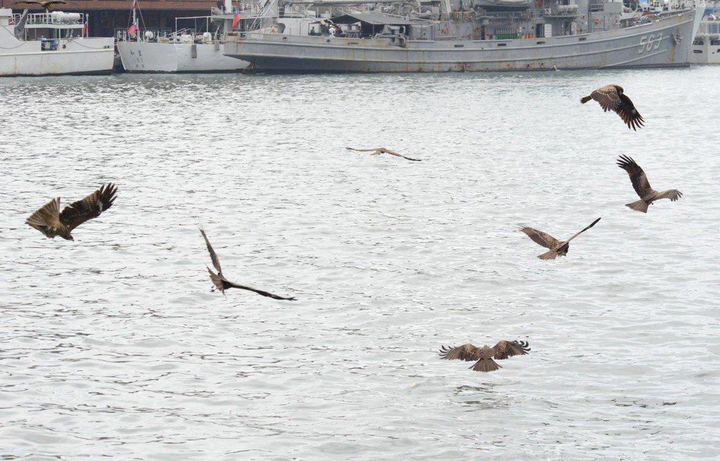 老鷹每天在基隆港上空飛翔,陳世一教民眾如何看門道,了解牠們飛行的美,以及覓食的姿...