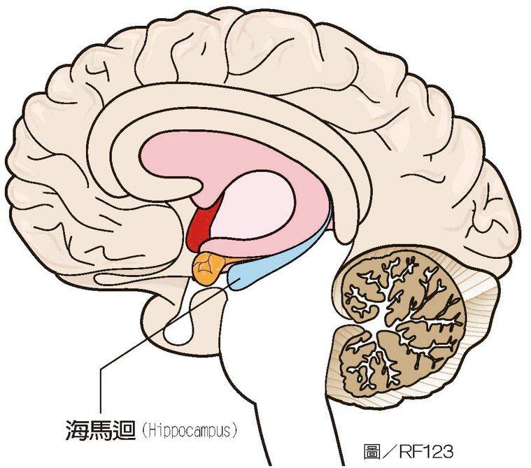 海馬迴是人類及脊椎動物腦中的重要部分。目前在有海馬迴的動物身上發現的海馬迴皆...