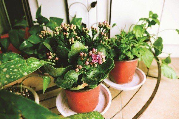 花卉和盆栽不僅可以美 化生活環境,心情也跟著好了起來(圖/ Shuttersto...