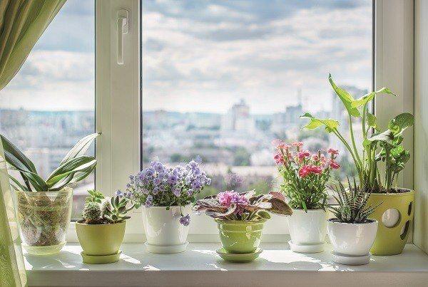 窗邊擺放幾盆美麗植栽,伴隨陽光灑落,居家生活更有朝氣。(圖/Shuttersto...