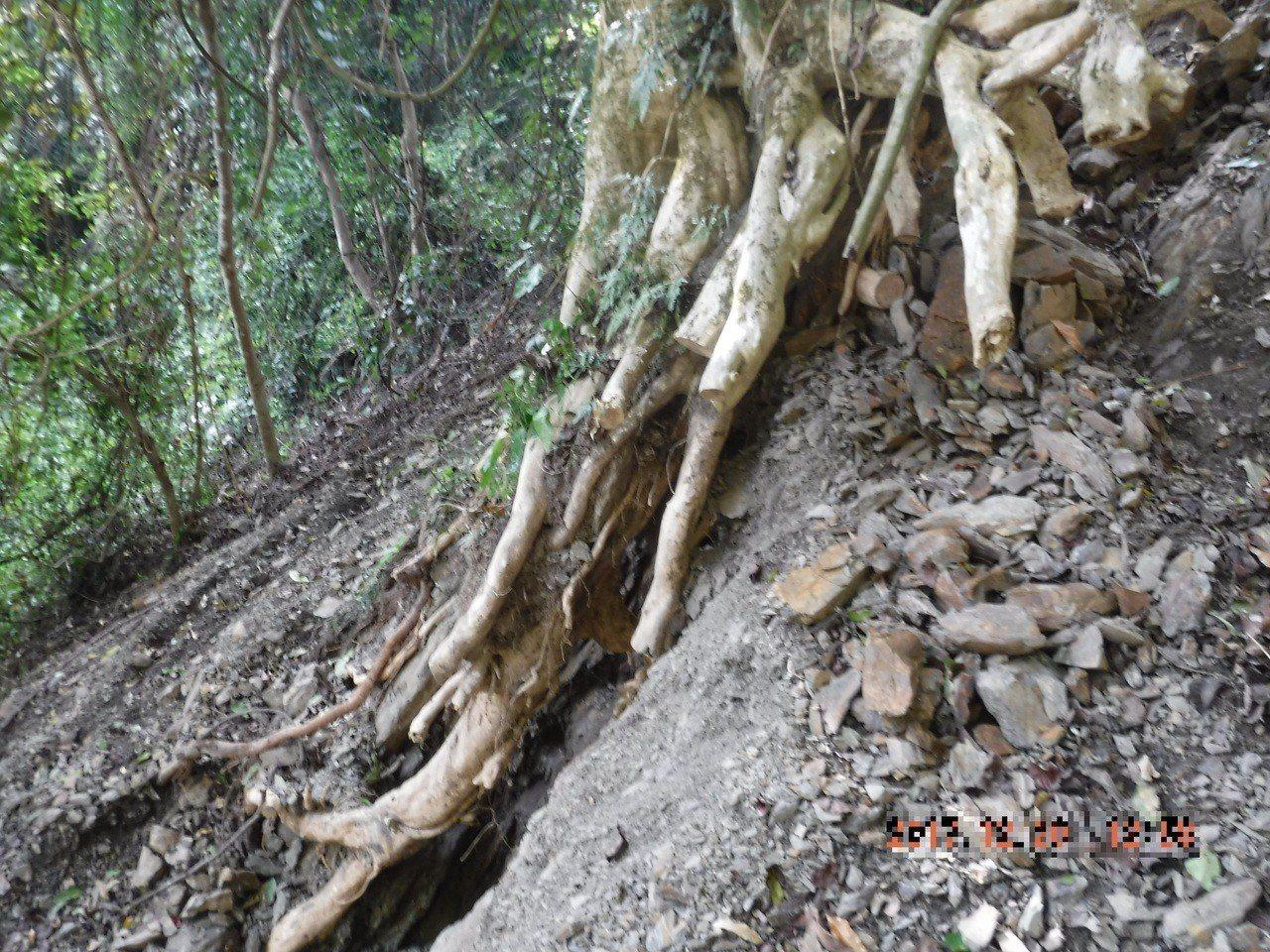 林、詹兩嫌為竊取破壞盤結在石頭上的樹根,挖出龜甲石23顆,總重約17.43公斤。...