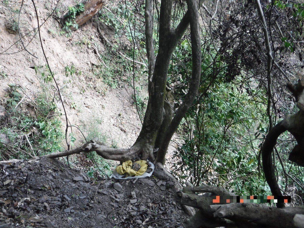 林、詹兩嫌為竊取破壞盤結在石頭上的樹根,而樹木遭斷根恐有枯死之虞。圖/保七總隊第...