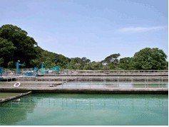 自來水公司第三區管理處第一淨水場(如圖)等處淨水場進水與出水都符合標準。照片/三...