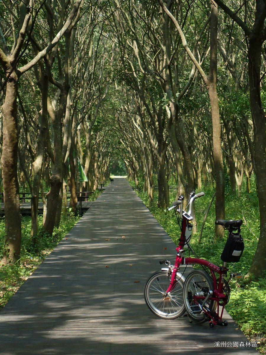 碧草如茵的溪州公園,騎行單車於此,讓人感到非常放鬆及悠閒。圖/台灣樂活自行車協會...
