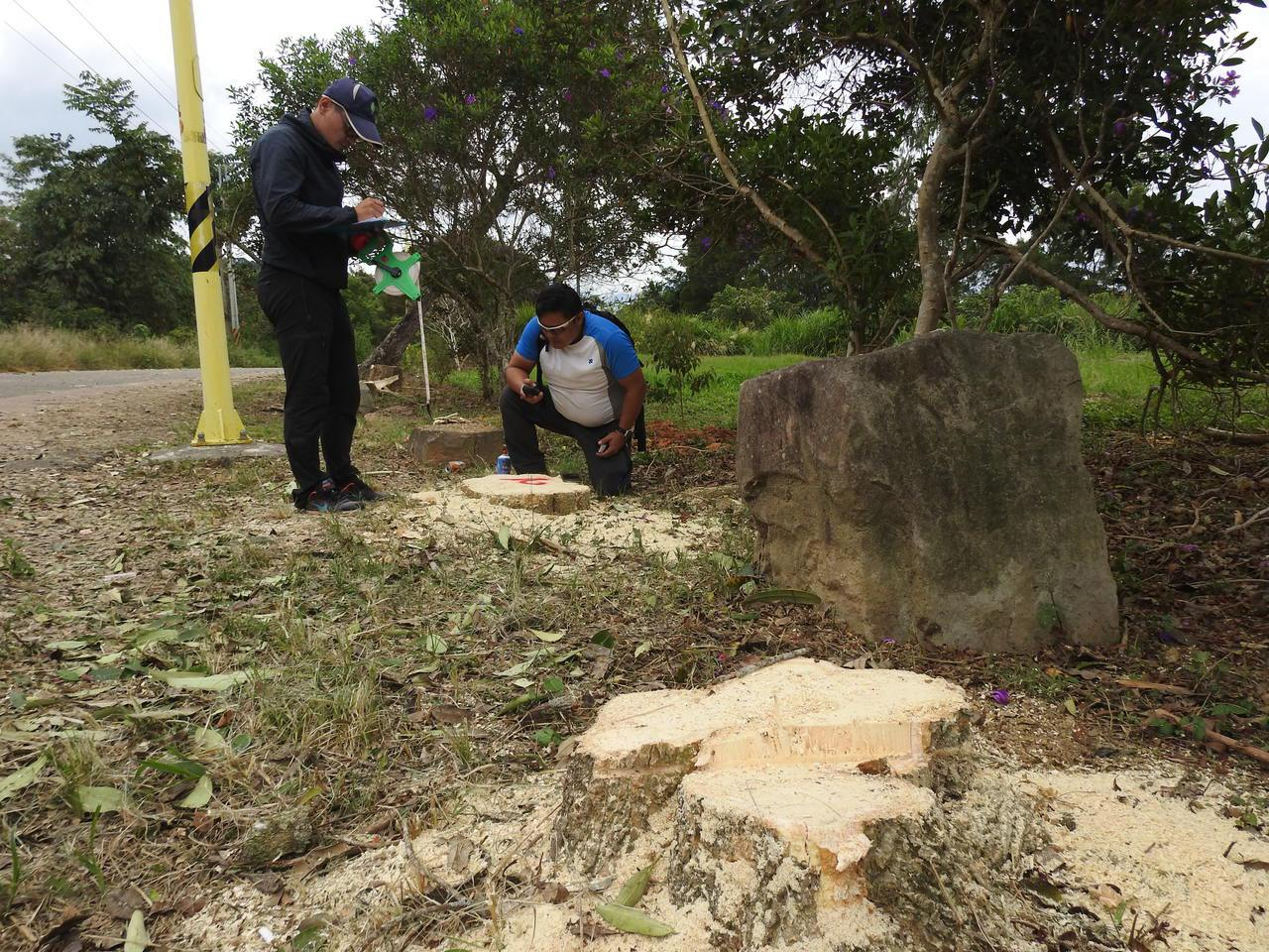 埔里公所疑誤砍南投林管處虎頭山轄內數木,經調查量測後,有8棵黑板樹和1棵榕樹遭砍...