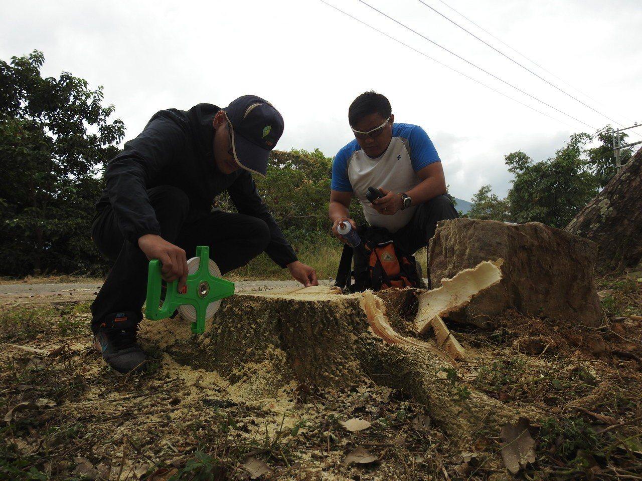 南投林管處在埔里虎頭山樹木遭當地公所誤砍,今依法開罰15萬元罰鍰。圖/本報資料照